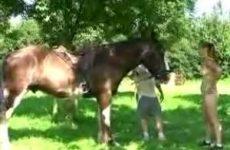 Het valt nog niet mee een paard te temmen